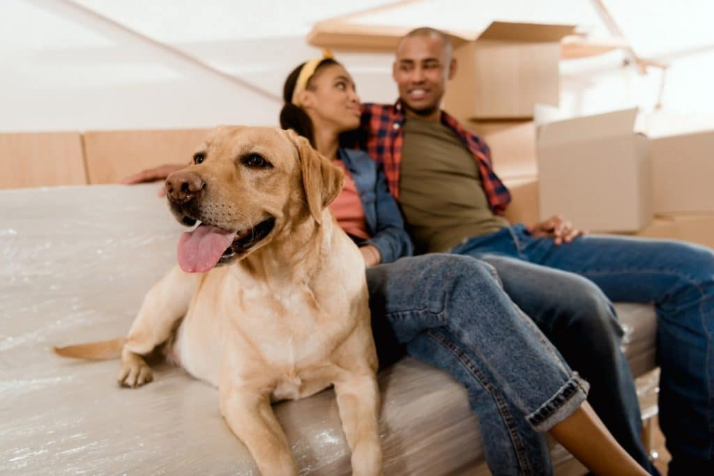 Young black couple on the couch with their yellow Labrador Retriever, next to moving boxes