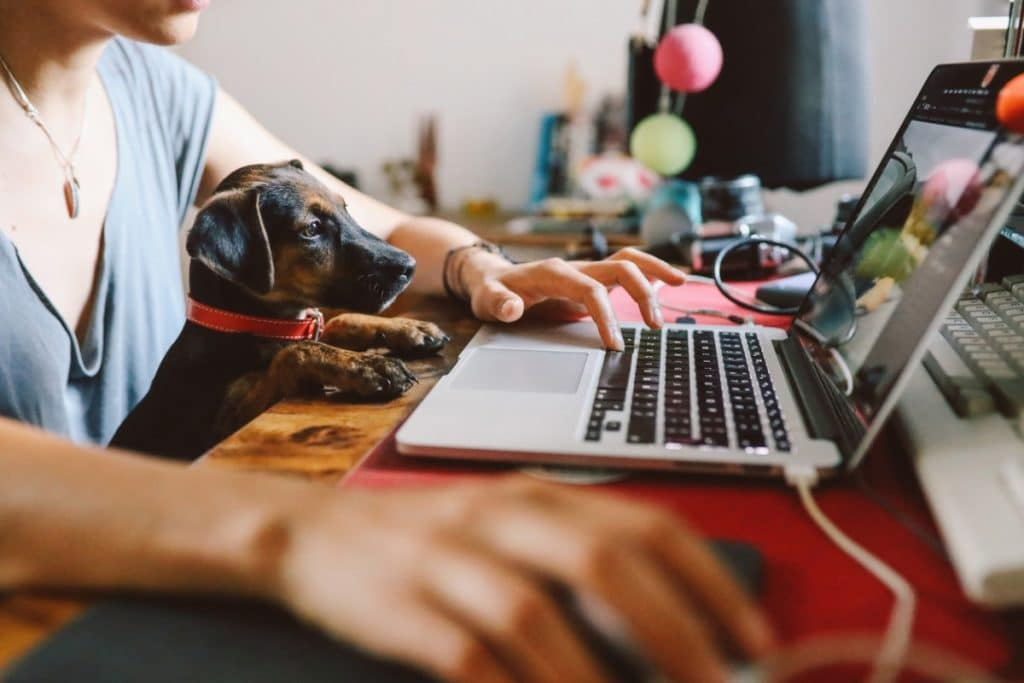 Woman sitting with small dog in her lap and using the computer to follow one of the five tips for moving with pets: update your pet's information
