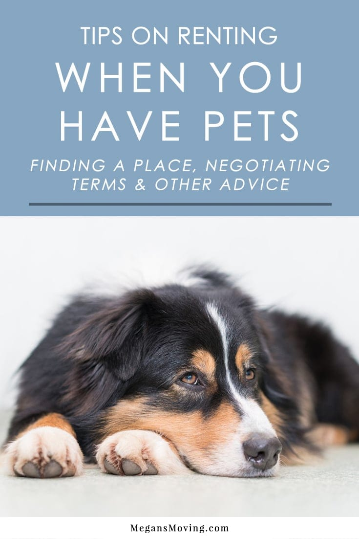 Looking for pet-friendly rentals? Follow these tips for finding the right place, negotiating terms, and other important aspects of living in a rental with pets.