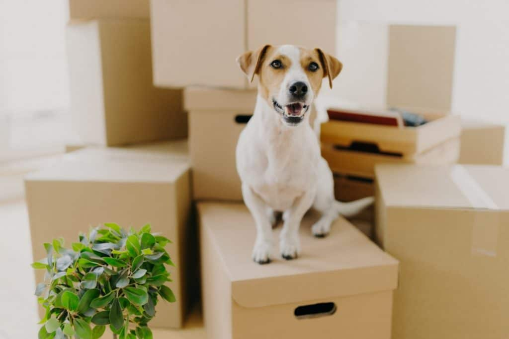 Small dog sitting on stack of moving boxes
