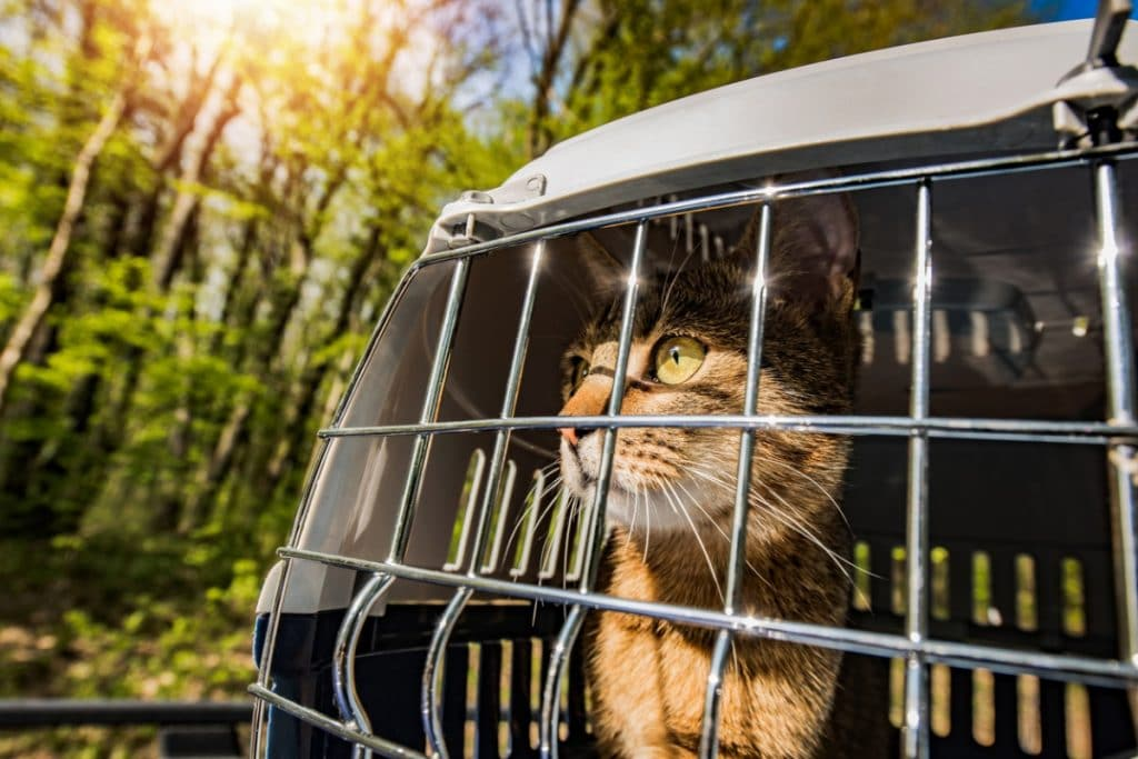 Cat looking out through the bars of a pet carrier at the trees outside