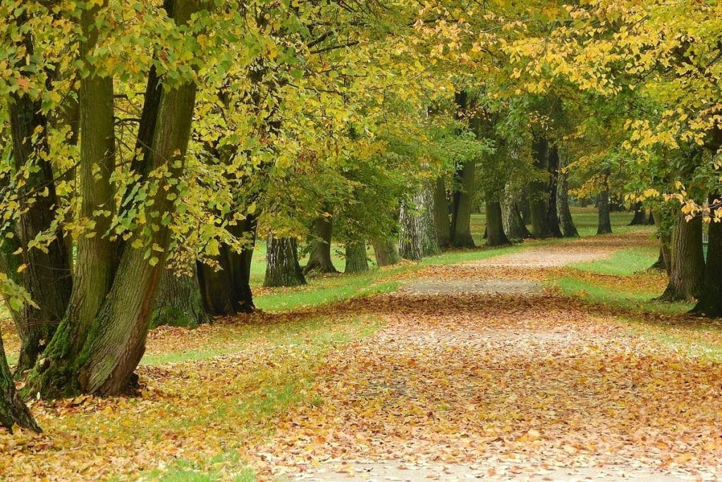 A tree-lined road filled with fallen leaves.